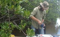 Exemple de mesures in situ de pH et conductivité dans l'un des sites mangrove du transect Coco